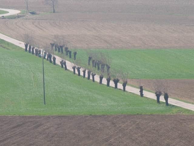 Un'immagine veneta, con i salici capitozzati, quelli dai rami flessibili per fare cesti. Per noi sono Salgàri, per Zanzotto Sachèr